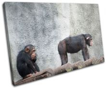 Chimpanzee funny Animals - 13-0310(00B)-SG32-LO